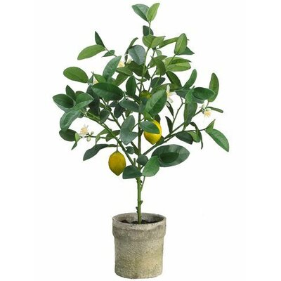 Lemon Topiary Plant in Pot