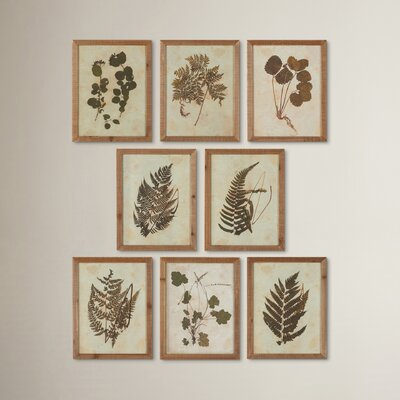 Botanical Specimen 8 Piece Framed Graphic Art Set