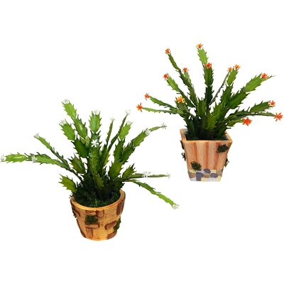 2 Piece Succulent Floor Plant in Pot Set