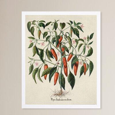 'Piper Indicum Medium' Framed Graphic Art