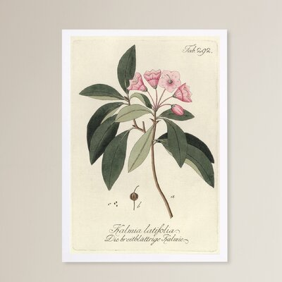 'Kalmia Latifolia' Framed Graphic Art