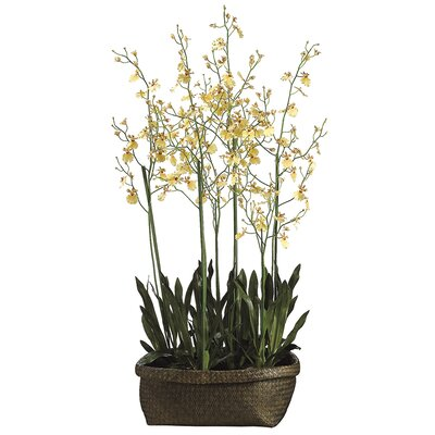 Oncidium Orchid Faux Florals Plant in Basket