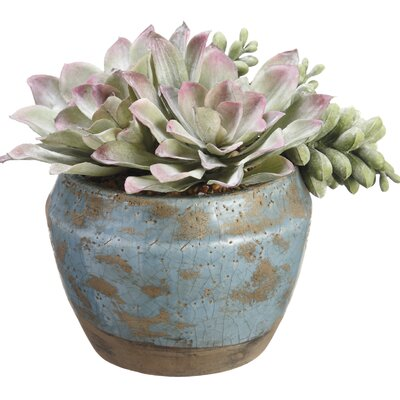 Pick/Echeveria Mixed Floral Arrangements in Terra Cotta Container