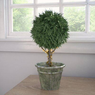 Blackfoot Cedar Ball Topiary in Pot Size: 16 H x 6 W x 6 D