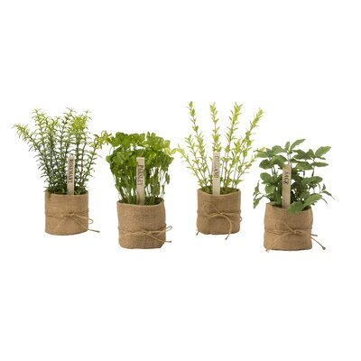 4 Piece Desk Top Foliage Plant Set (Set of 4)