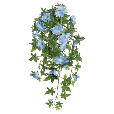 Morning Glory Hanging Bush AGGR2351 37814649