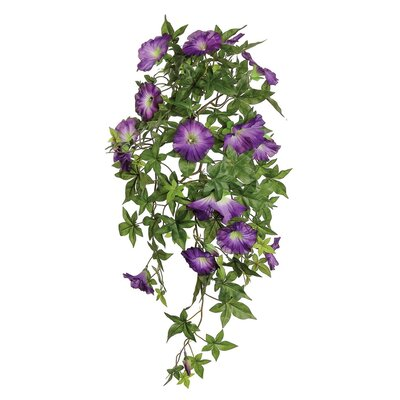 Morning Glory Hanging Bush AGGR2351 37814650