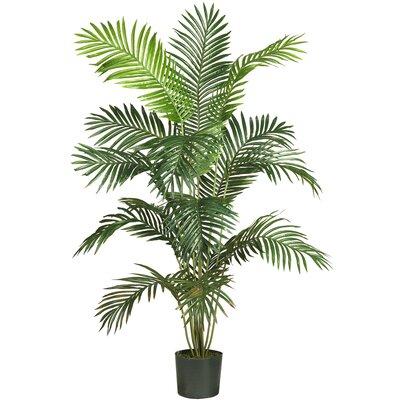 Beachcrest Home Black Hammock Palm Tree with Pot SEHO2078 26056980