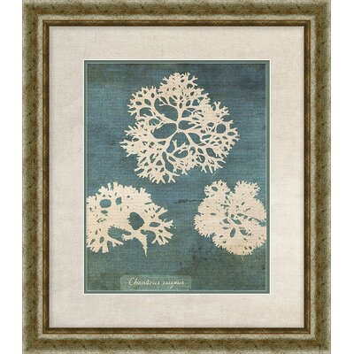 'Coral I' Framed Graphic Art