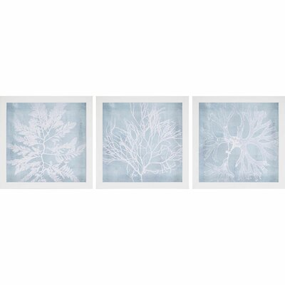 'Seaweed I' 3 Piece Framed Graphic Art Set