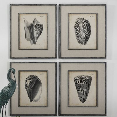 'Vintage Diderot Shells' 4 Piece Framed Painting Print Set