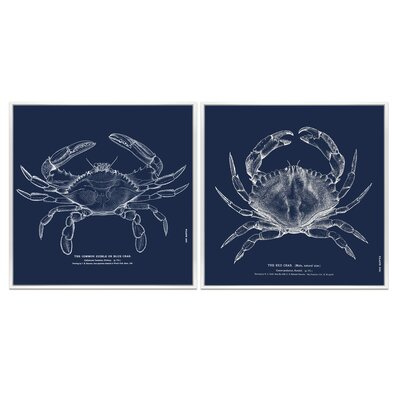 The Common Crab 2 Piece Framed Graphic Art on Fabric Set