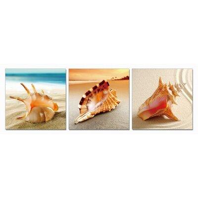 'Shells' 3 Piece Photographic Print Set