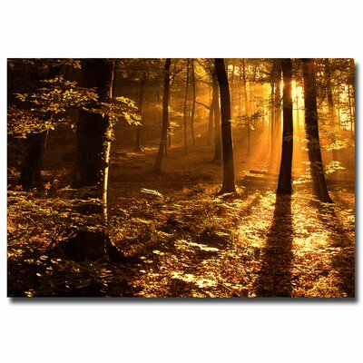 Morning Light Photographic Print on Canvas Size: 16