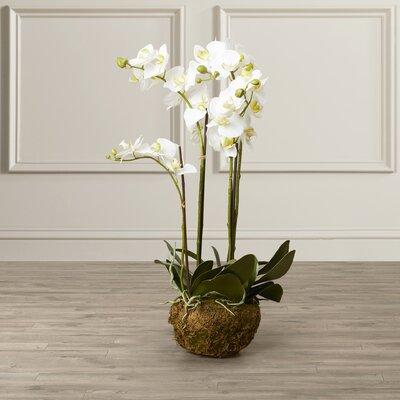 Phalaenopsis Faux Floral