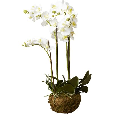 Phalaenopsis Faux Floral Orchids Flowers