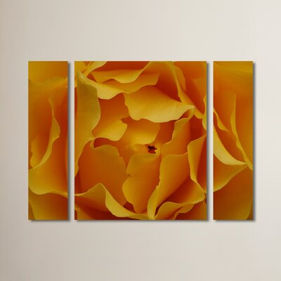 'Hypnotic Yellow Rose' by Kurt Shaffer 3 Piece Photographic Print on Wrapped Canvas Set