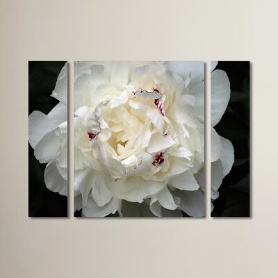 'Perfect Peony' by Kurt Shaffer 3 Piece Photographic Print on Wrapped Canvas Set