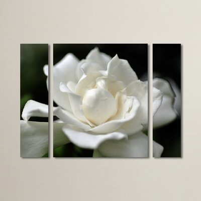 Lovely Gardenia by Kurt Shaffer 3 Piece Photographic Print on Wrapped Canvas Set Size: 24
