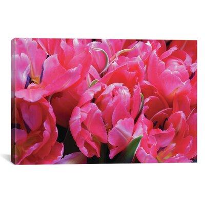 Con Brio Photographic Print on Wrapped Canvas Size: 12