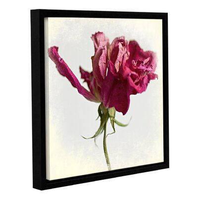 'Pink Rose' by Sia Aryai Framed Photographic Print Size: 10