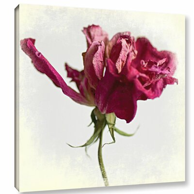 'Pink Rose' by Sia Aryai Photographic Print on Wrapped Canvas Size: 10