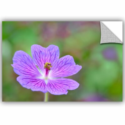Cranesbill Removable Wall Decal Size: 08