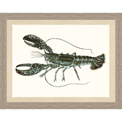 'Lobster' Framed Graphic Art Print