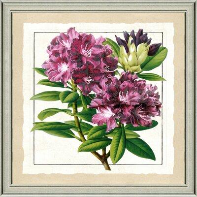 'Bold Botanical IV' Framed Graphic Art Print