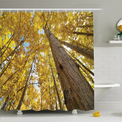 Forest Aspen Tree Leaves in Fade Tone Autumn Season Photo Image Shower Curtain Set Size: 70 H x 69 W