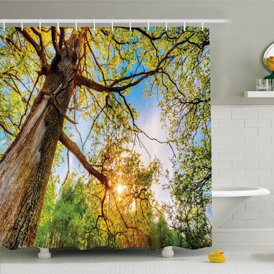 Forest Vibrant Summer Lights above Oaks Rural Angle Freshness Sky Panorama Art Shower Curtain Set Size: 75 H x 69 W