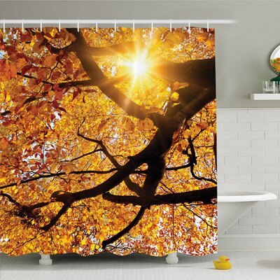 Forest Sun through Leaf  Vivid October Foliage Harvest Serene Paradise �Shower Curtain Set Size: 70 H x 69 W