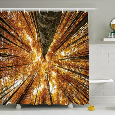 Forest Beech Trees Deciduous Shedding Canadian Maples Idyllic Print �Shower Curtain Set Size: 75 H x 69 W