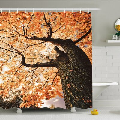 Forest Body of Old Tree Seedling Botany Woodsy Roots Falling Maple Leaf Design Shower Curtain Set Size: 84 H x 69 W