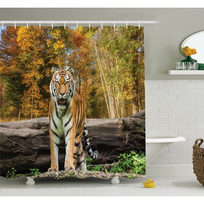 Animal Tiger in Forest Shower Curtain Set Size: 70 H x 69 W
