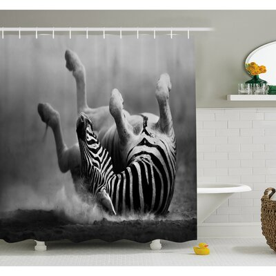 Wildlife Zebra Rolling in the Dust Artistic Savage Mammal Activity Eco Black and White Photo Shower Curtain Set Size: 70 H x 69 W