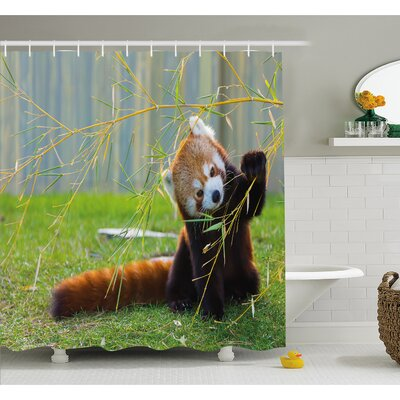 Wildlife Cute Red Panda on the Field Playing with Bamboo Branches Native Himalayas Shower Curtain Set Size: 70 H x 69 W