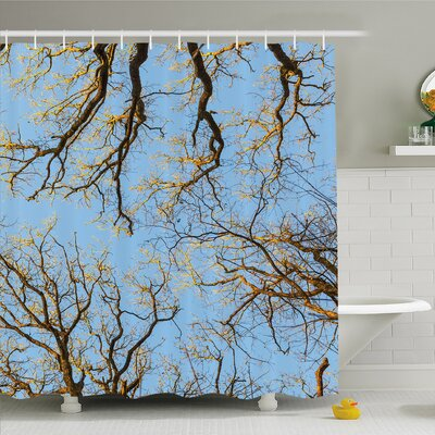 Forest Crown of Trees under Vibrant Sky Twig Birch Tranquil Air Radial Image Shower Curtain Set Size: 75 H x 69 W
