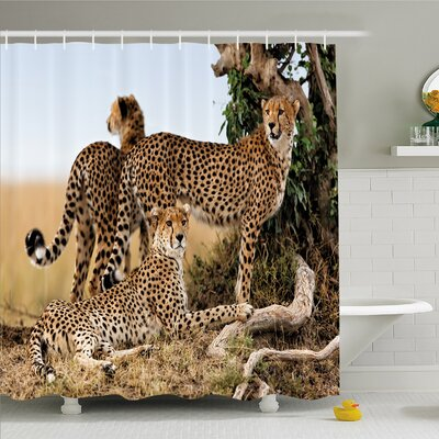 Wildlife, Cheetahs Mother and Two Young Baby Looking for Food Dangerous Exotic Animals Shower Curtain Set Size: 70 H x 69 W