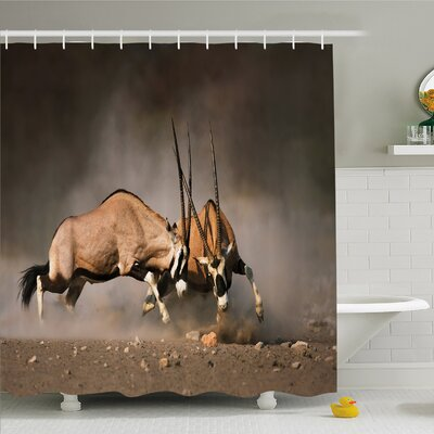Wildlife, Fight Battle Between Two Gemsbok on Plains of Etosha Namibia Savage Safari Shower Curtain Set Size: 75