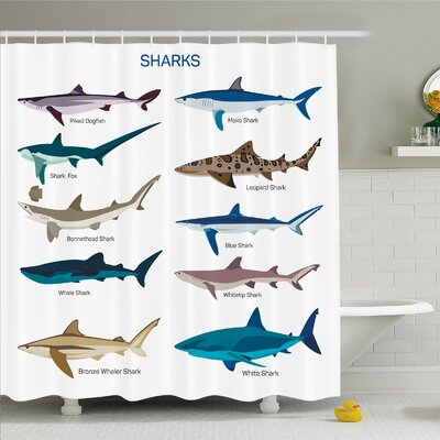 Sea Animal Collection Types of Sharks Bronze Whaler and Piked Dogfish Fox Maritime Design Shower Curtain Set Size: 84 H x 69 W