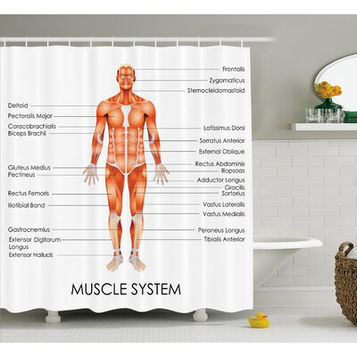 Human Anatomy Muscle System Diagram of Man Body Features Biological Elements Medical Heath Image Shower Curtain Size: 69 W x 70 H