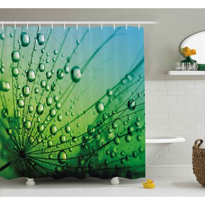 Katie Flower Theme Macro Photo of Dandelion Seeds With Water Drops Digital Image Shower Curtain Size: 69 W x 70 H