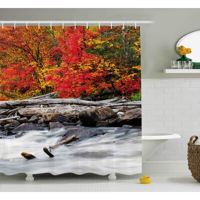 Bernie a Raft of Driftwood Lies By a Rushing Rocky Stream Autumn Forest Digital Image Shower Curtain Size: 69 W x 70 H