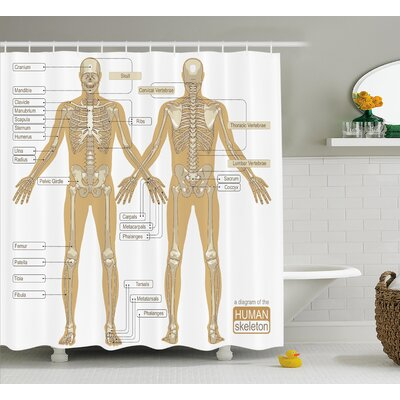 Human Anatomy Diagram of Human Skeleton System With Titled Main Parts of Body Joints Picture Shower Curtain Size: 69 W x 70 H
