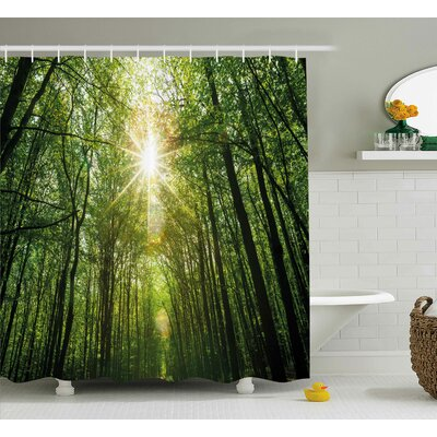 Liz Forest Summer Trees Upward View With Sunrays Leaking From Branches Nature Image Shower Curtain Size: 69 W x 70 H