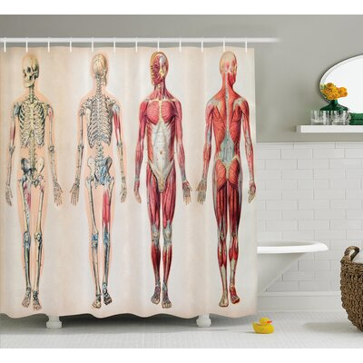 Human Anatomy Vintage Chart of Body Front Back Skeleton and Muscle System Bone Mass Graphic Shower Curtain Size: 69 W x 84 H