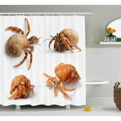 Bulfinch Crabs Sea Animals Theme Set of Hermit Crabs From Caribbean Sea Digital Print Shower Curtain Size: 69 W x 70 H