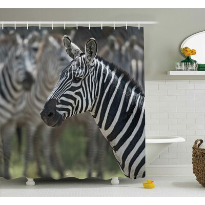 Emmi Shower Curtain Size: 69 H x 75 W