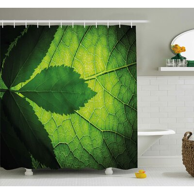 Leaf with Vein Decor Shower Curtain Size: 69 H x 75 W